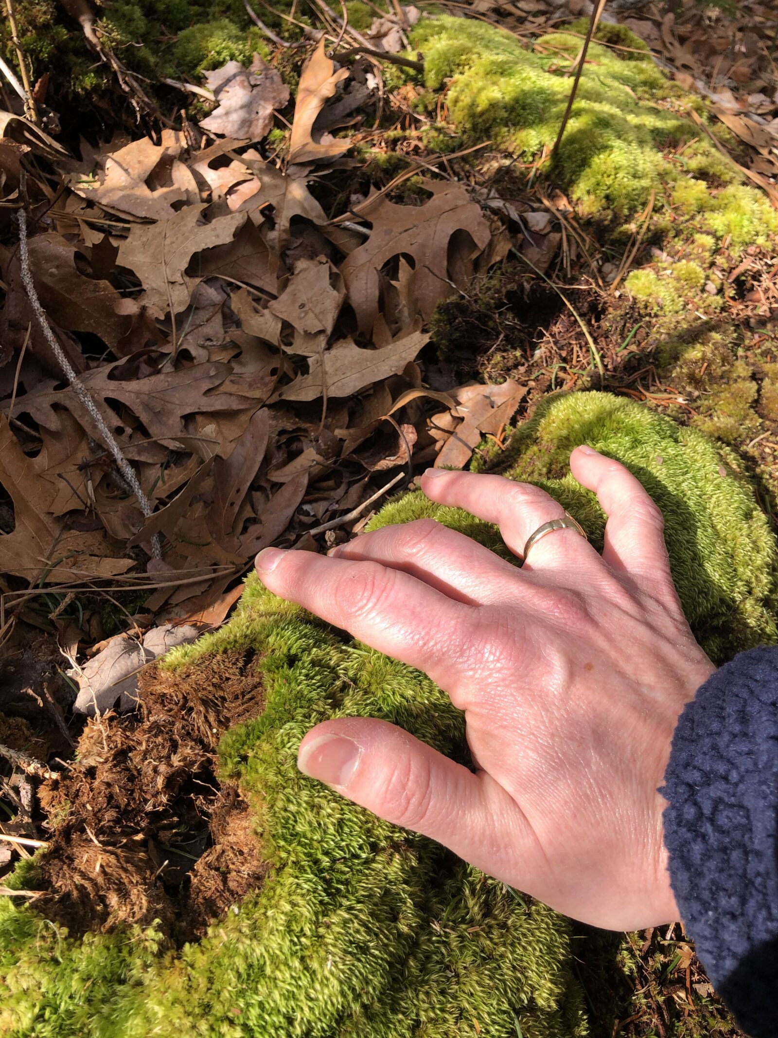 hand on green moss, woods, leaves, earth